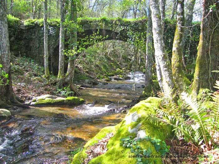 El camino del agua - puente