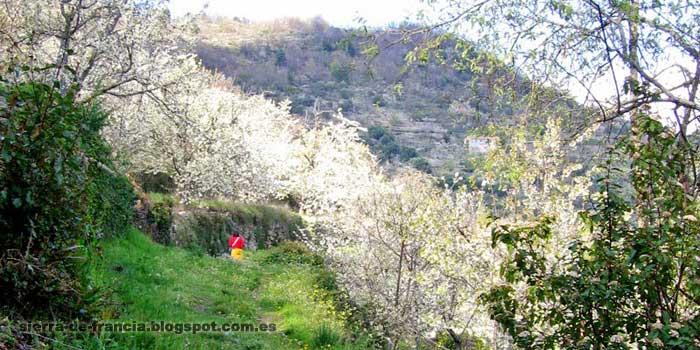El camino del agua - Mogarraz-Monforte
