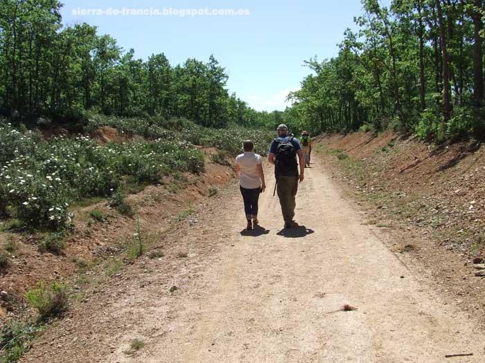 San Miguel Del Robledo - Cumbre de la Carrascosa