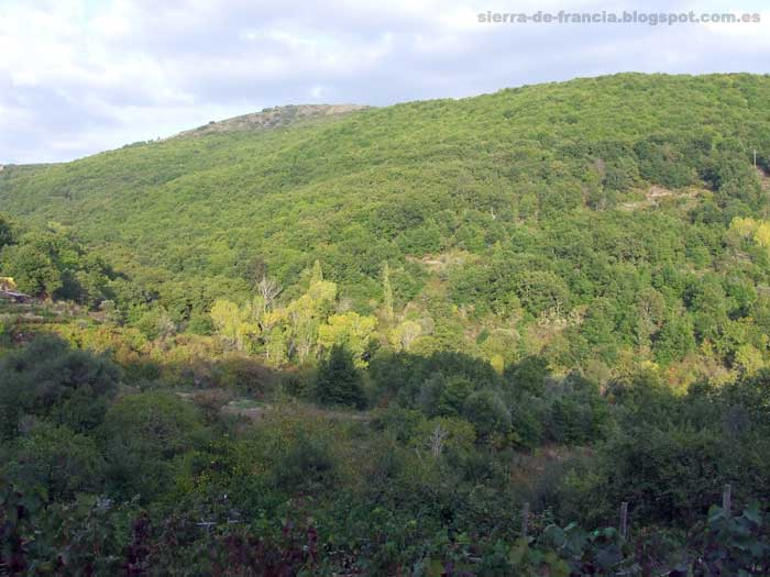 bosque de san martín del castañar