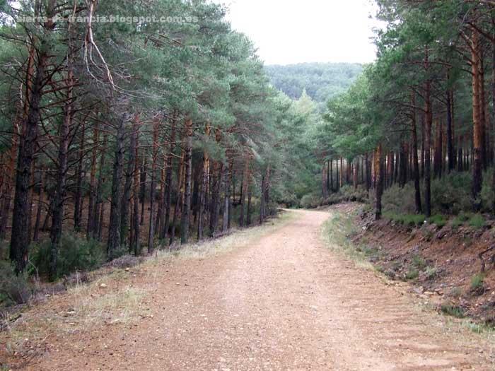 pista forestal