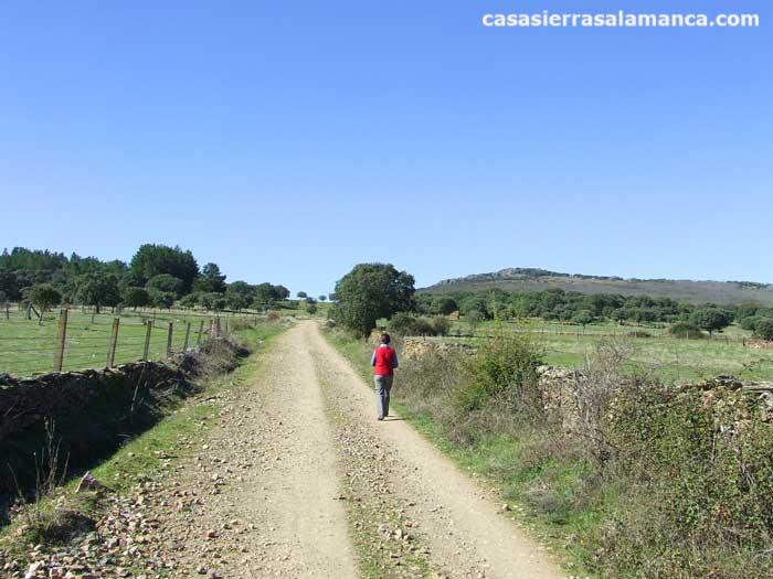 Aldeanueva de la Sierra, camino de el Zarzoso