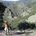 Castill de cabras-Sierra de Las Quilamas