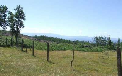 San Miguel Del Robledo – Cumbre de la Carrascosa