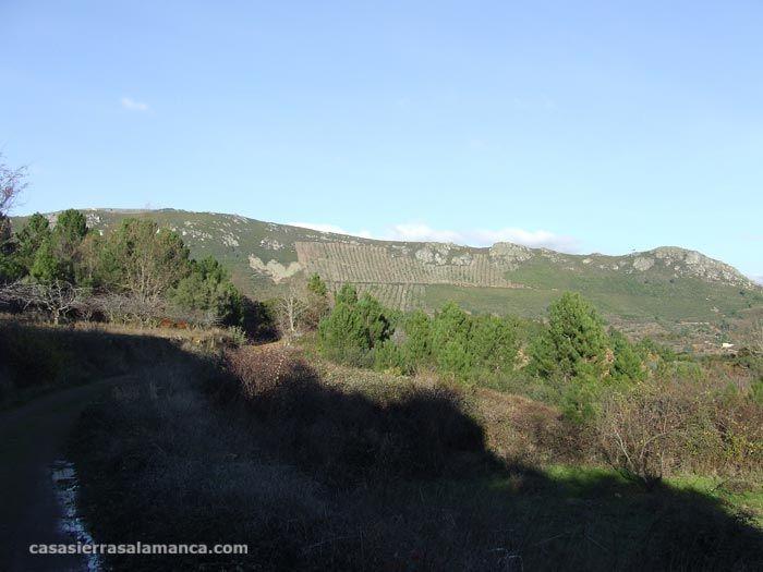 Vistas de la buitrera de Garcibuey