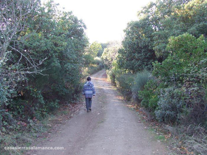 bosque de madroños-Villanueva Del conde