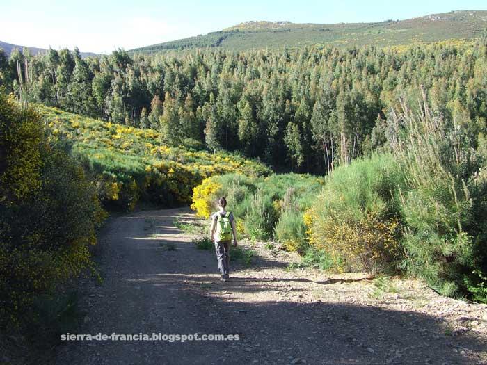 caminando en los montes de garcibuey