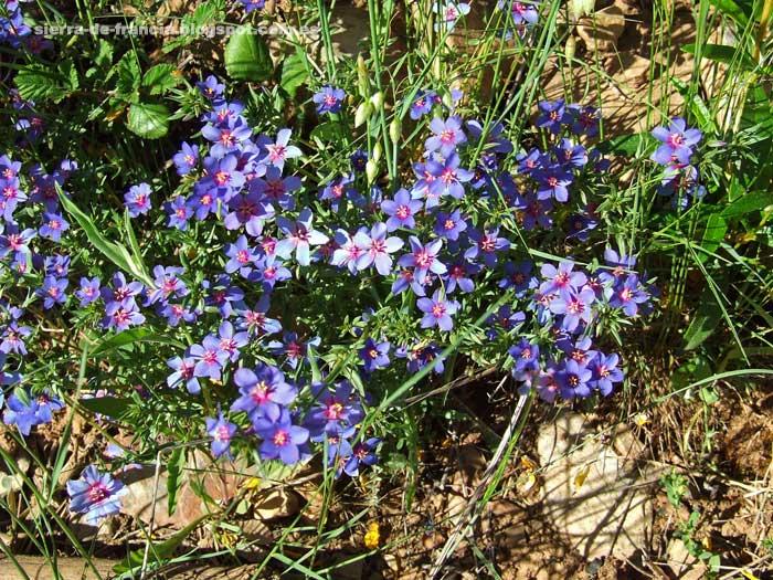 flores de verano