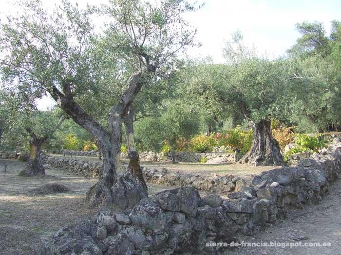 olivos esculpidos en casas del conde